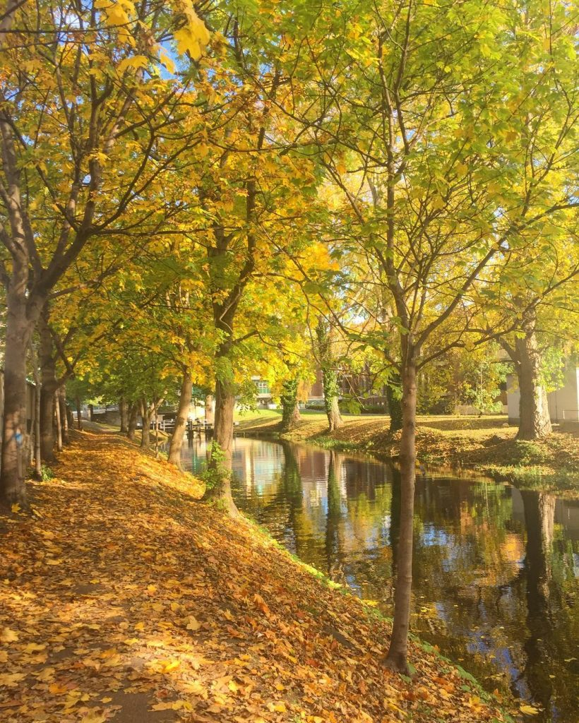 The Grand Canal is one of 10 romantic spots for a picnic in Dublin